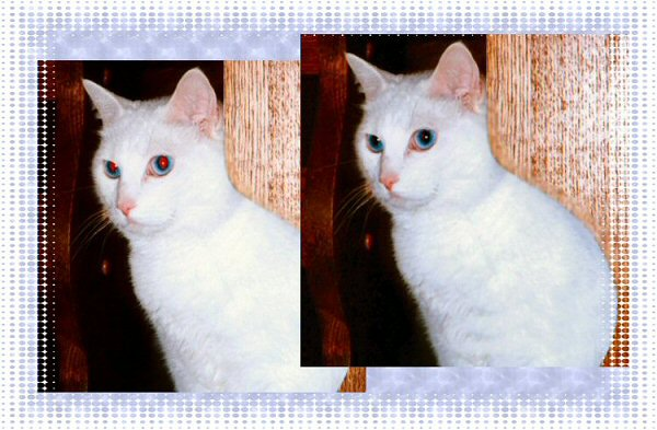 Photo Restoration and Repair - repair redeye pupil, cat - Photo Restoration by SmileDogProductions.com