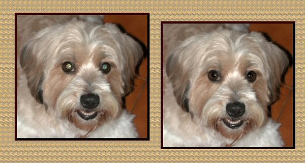 Photo Restoration and Repair - fix redeye, dog - Photo Restore by SmileDogProductions.com